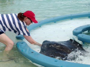 Feeding Stingrays at Castaway Cay - Disney Cruise Line Travel Tips at ALittleClaireification.com #disney #DCL