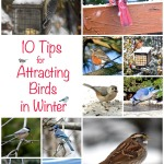 10 Tips For Attracting Birds In Winter