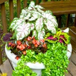 Pretty Container Gardens Made Easy