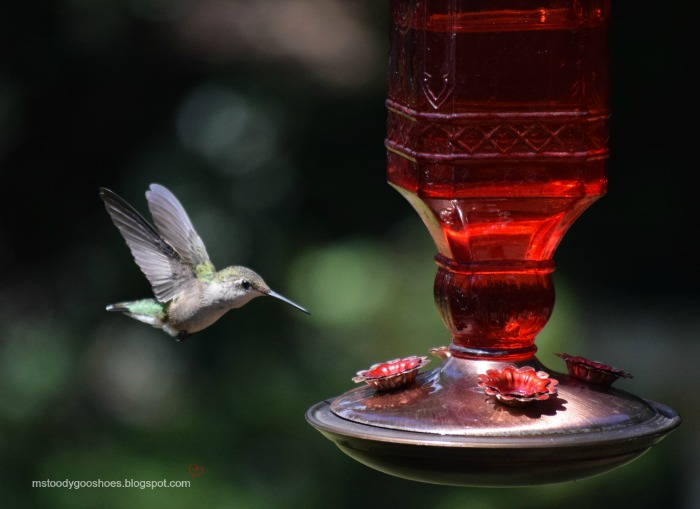 Seven Reasons To Be A Backyard Bird Watcher | Ms. Toody Goo Shoes