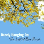 Barely Hanging On – The Last Yellow Flower