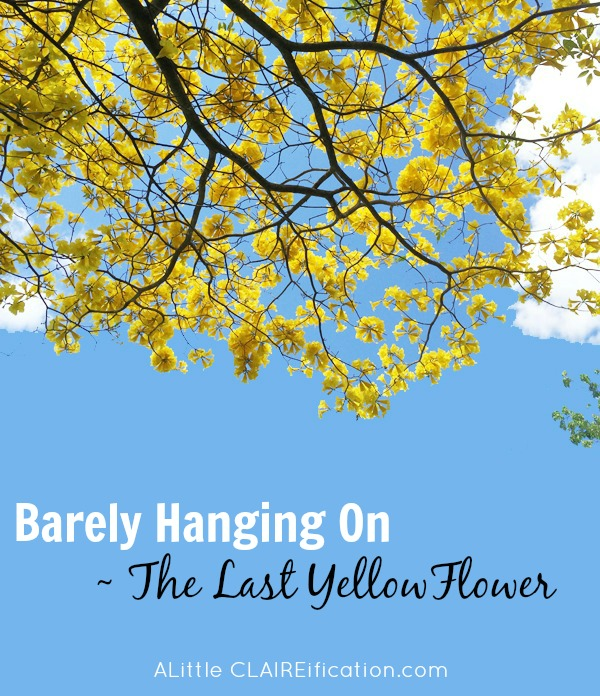 Barely Hanging On - The Last Yellow Flower : Life can be consuming sometimes yet each new day is a gift and we can start anew.