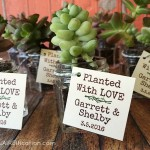 Succulents In Jars Wedding Favors