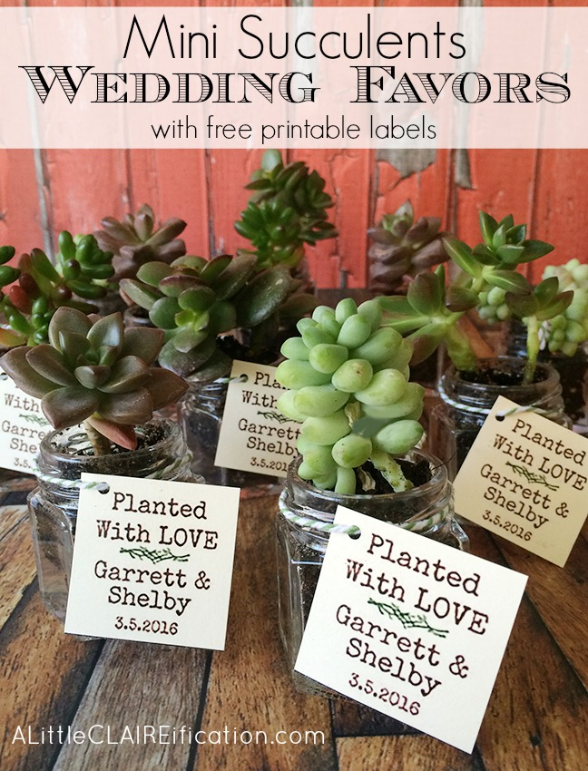 Succulents In Jars Wedding Favors - with free printable labels