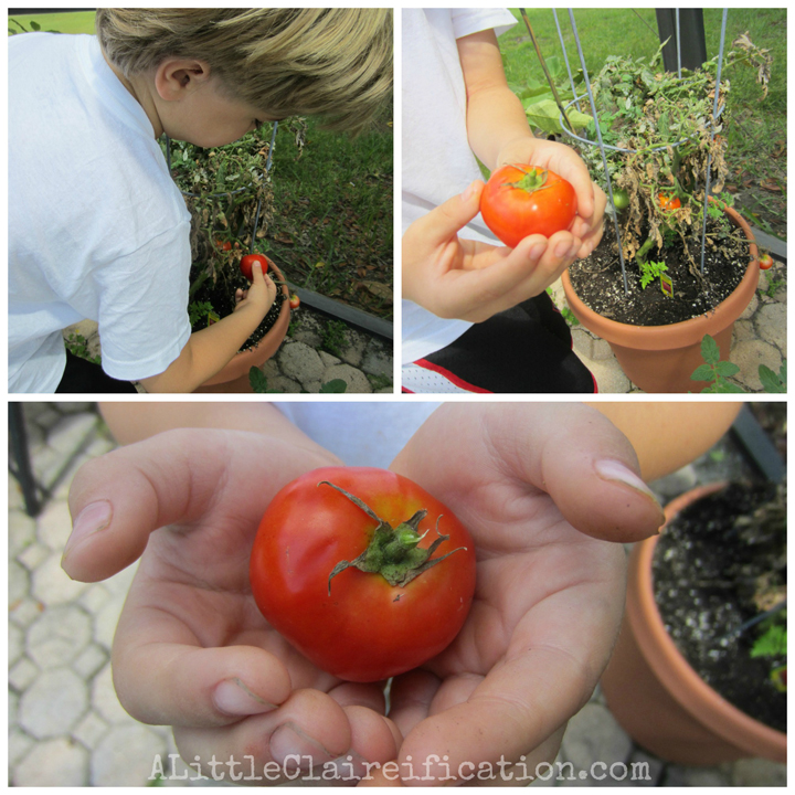 Our Patio Garden: Growing Our Own Food at ALittleClaireification.com #gardens #miraclegro